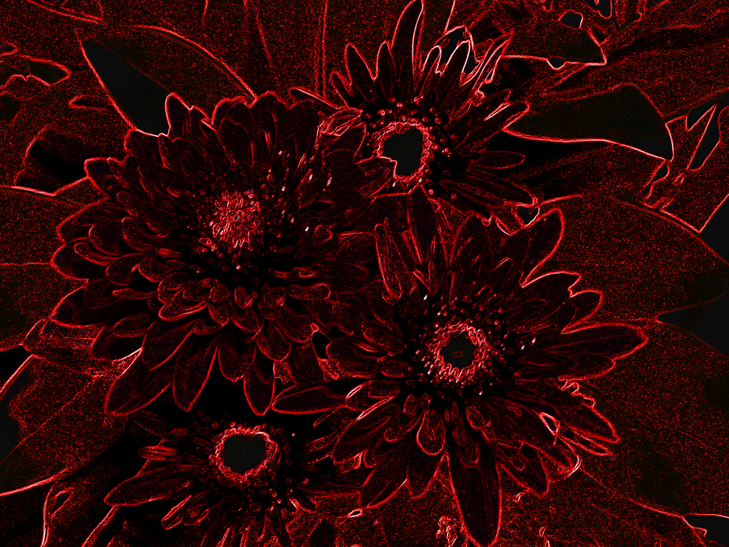 Third ~ March 2013 ~ Cut Velvet Bouquet © Joe Hudak