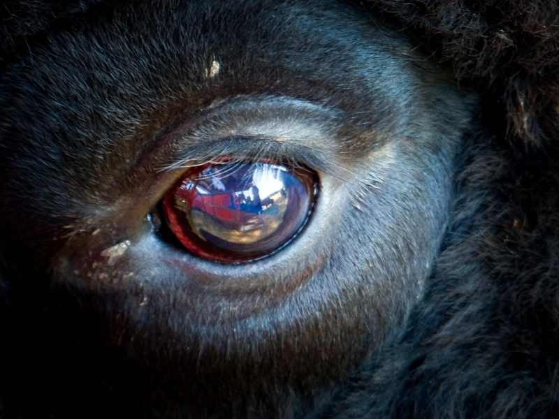 In a Bull's Eye © Josh Nadon