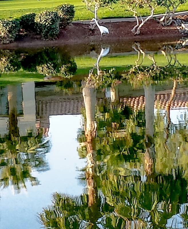 Water Reflections © Betty Todd