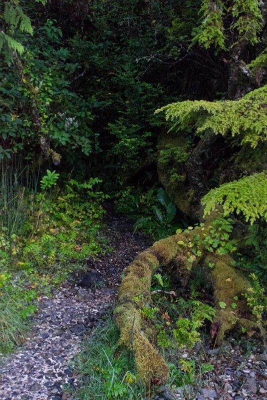 Pathway to... © Charlie Schaal