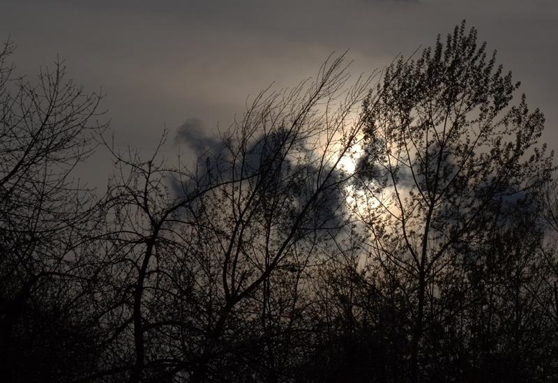 Silhouettes © Zan Stenhouse