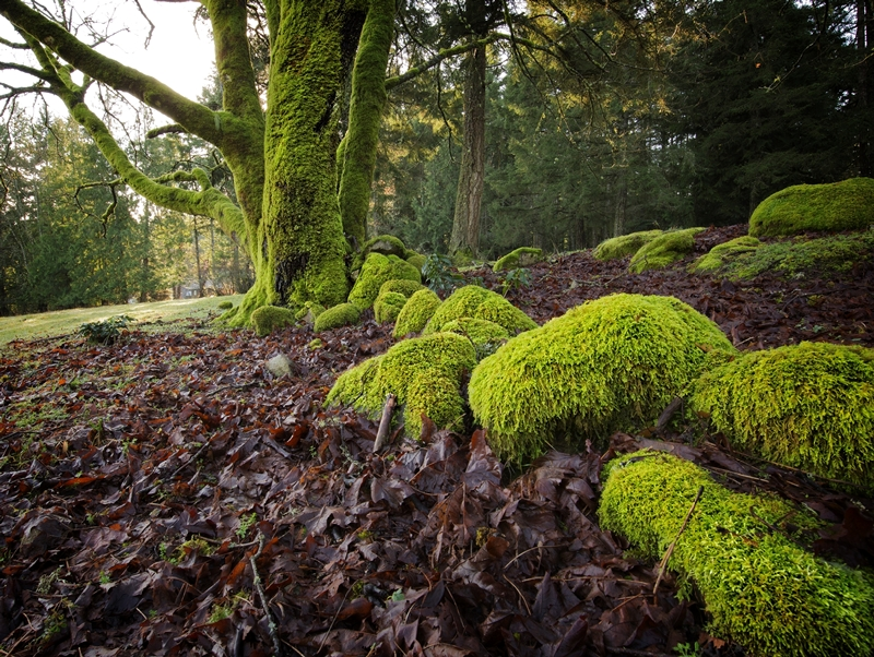 Third ~ February 2016 ~ Moss Leading Lines © Doug Bell